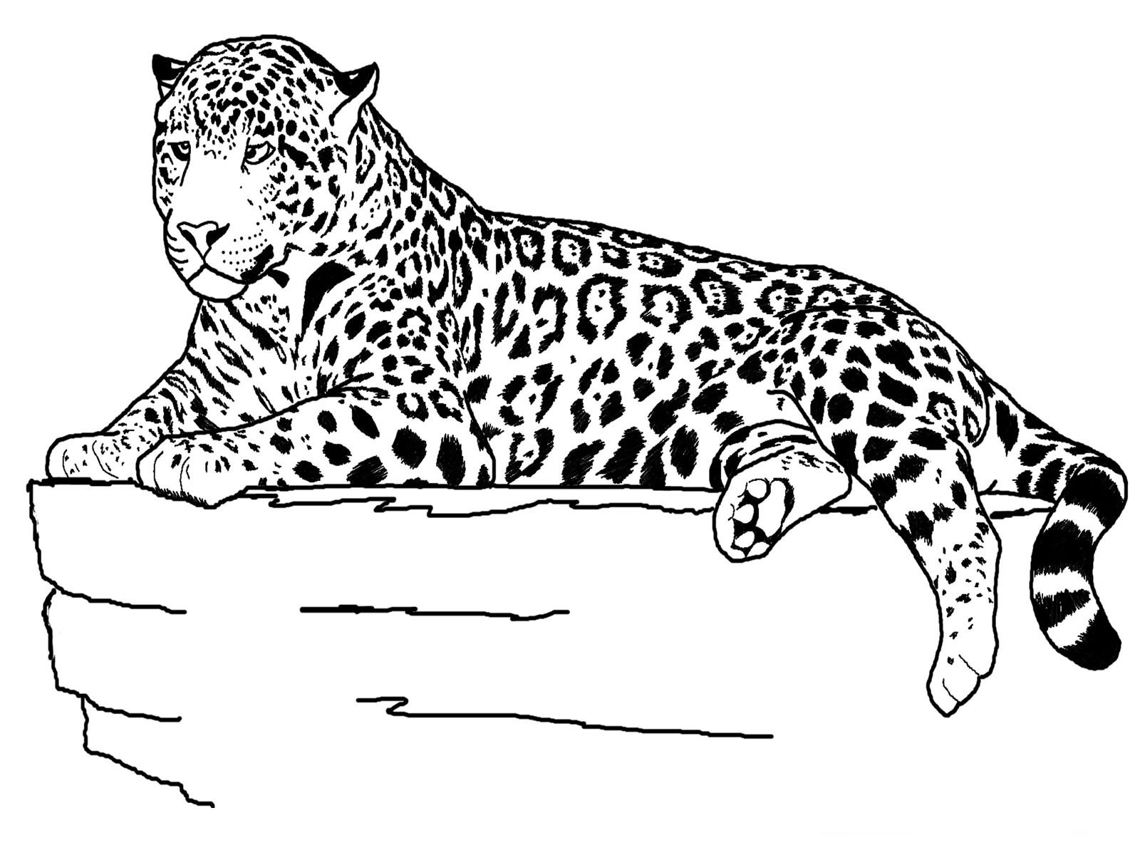 coloring pictures of cheetahs cheetah coloring pages download and print cheetah of pictures cheetahs coloring
