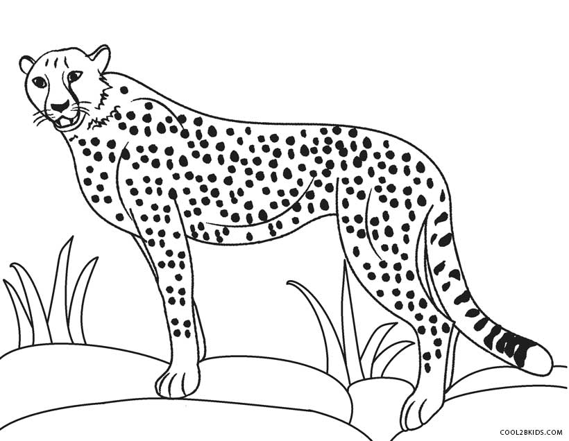 coloring pictures of cheetahs cheetah coloring pages to download and print for free pictures coloring of cheetahs
