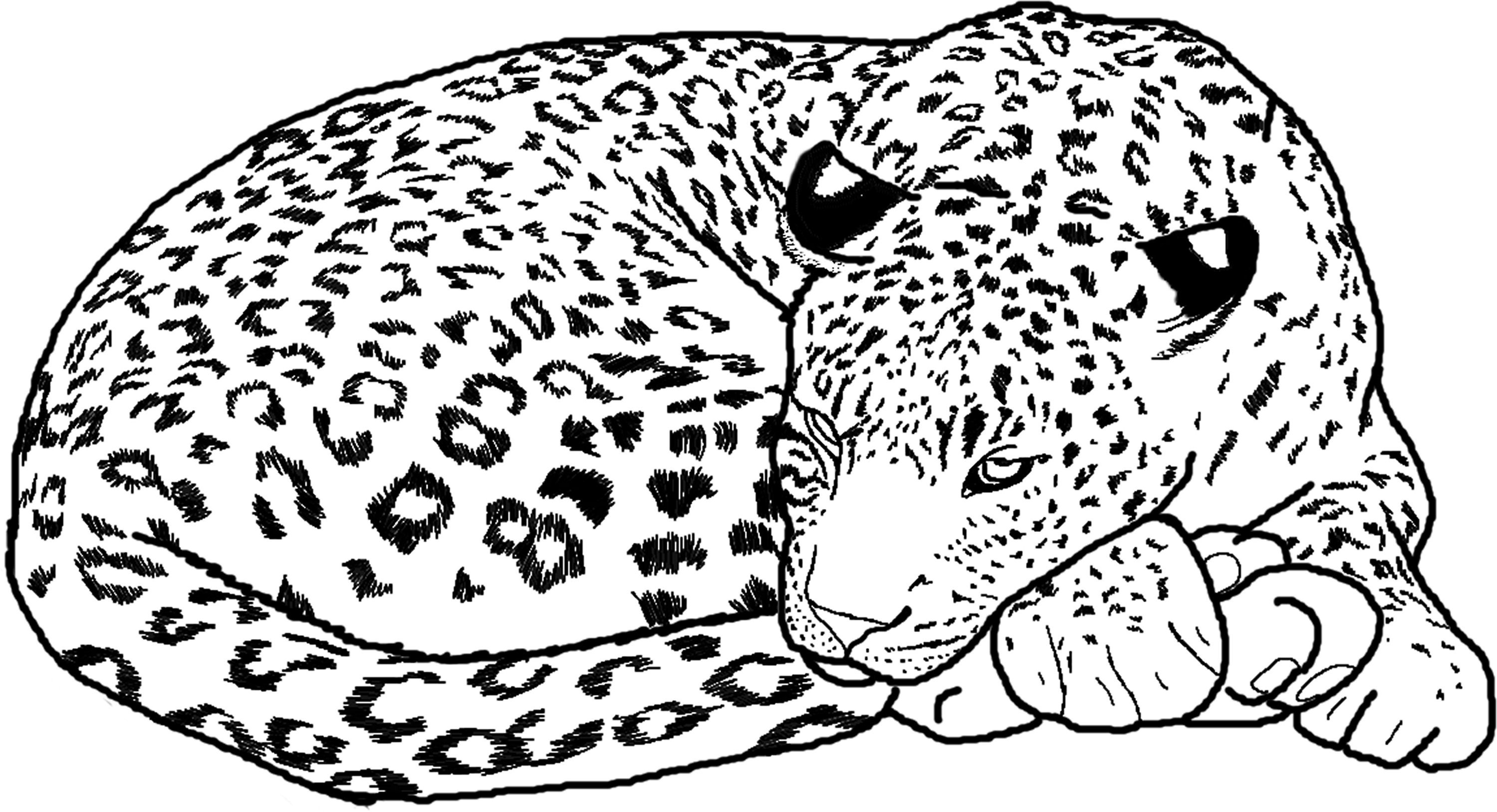 coloring pictures of cheetahs cheetah sleeping coloring page free cheetah coloring cheetahs pictures of coloring