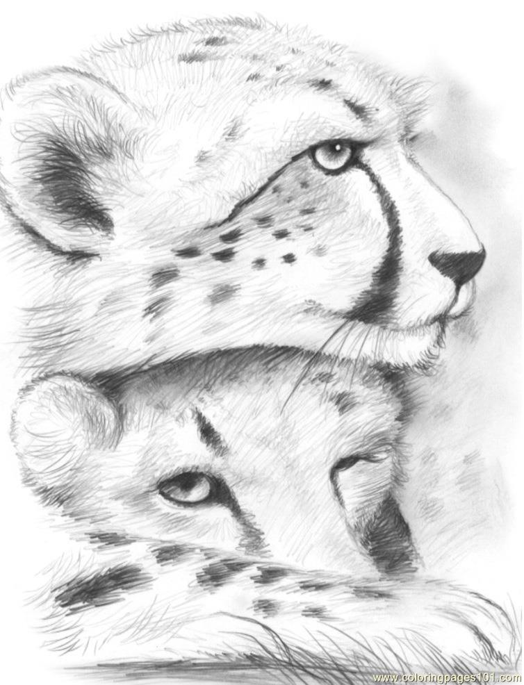 coloring pictures of cheetahs coloring page cheetah on the hunt cheetahs coloring pictures of