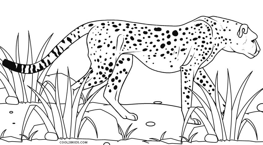 coloring pictures of cheetahs cute cheetah playing with a ball coloring page free coloring cheetahs pictures of