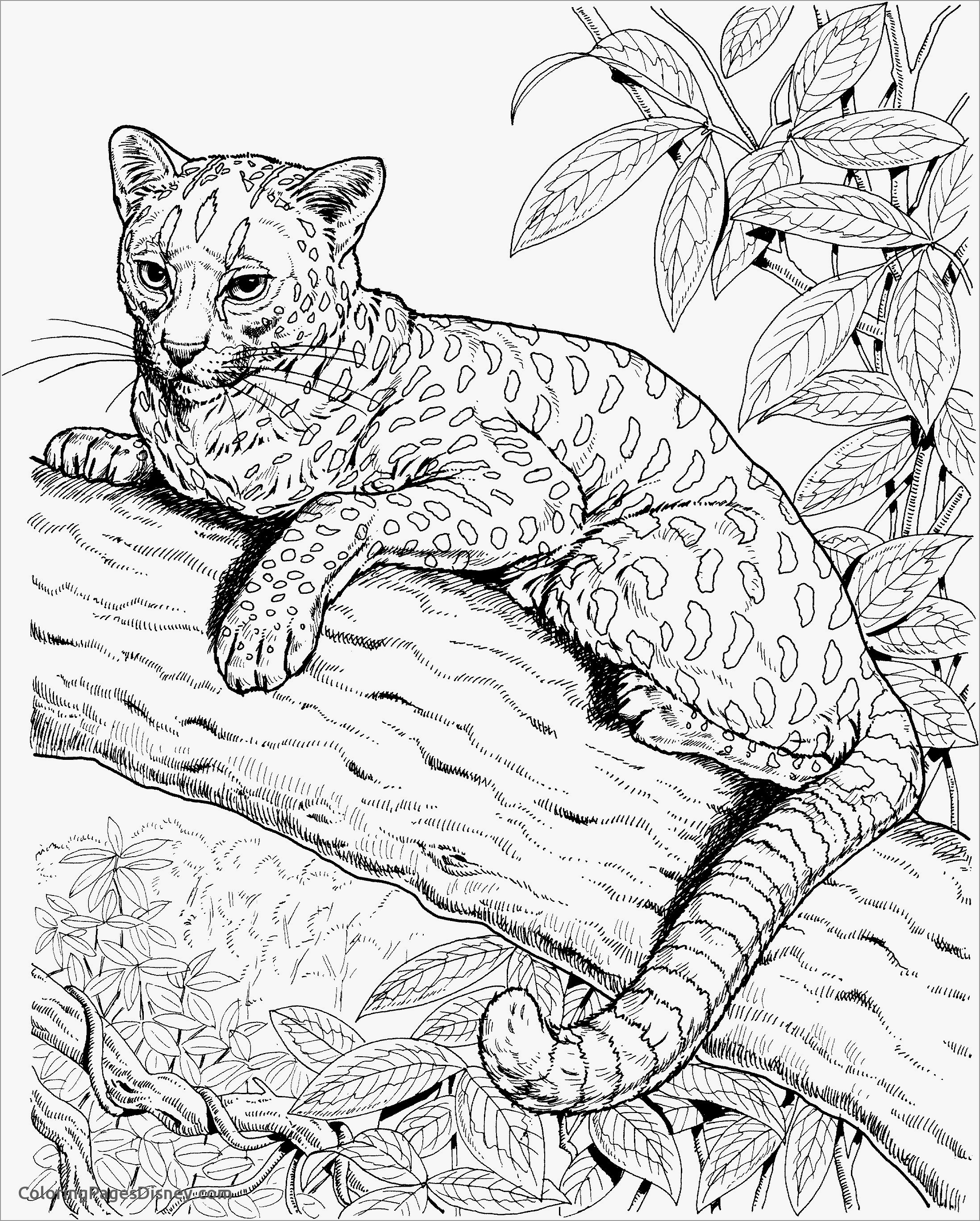 coloring pictures of cheetahs effortfulg cheetah print coloring pages coloring pictures cheetahs of