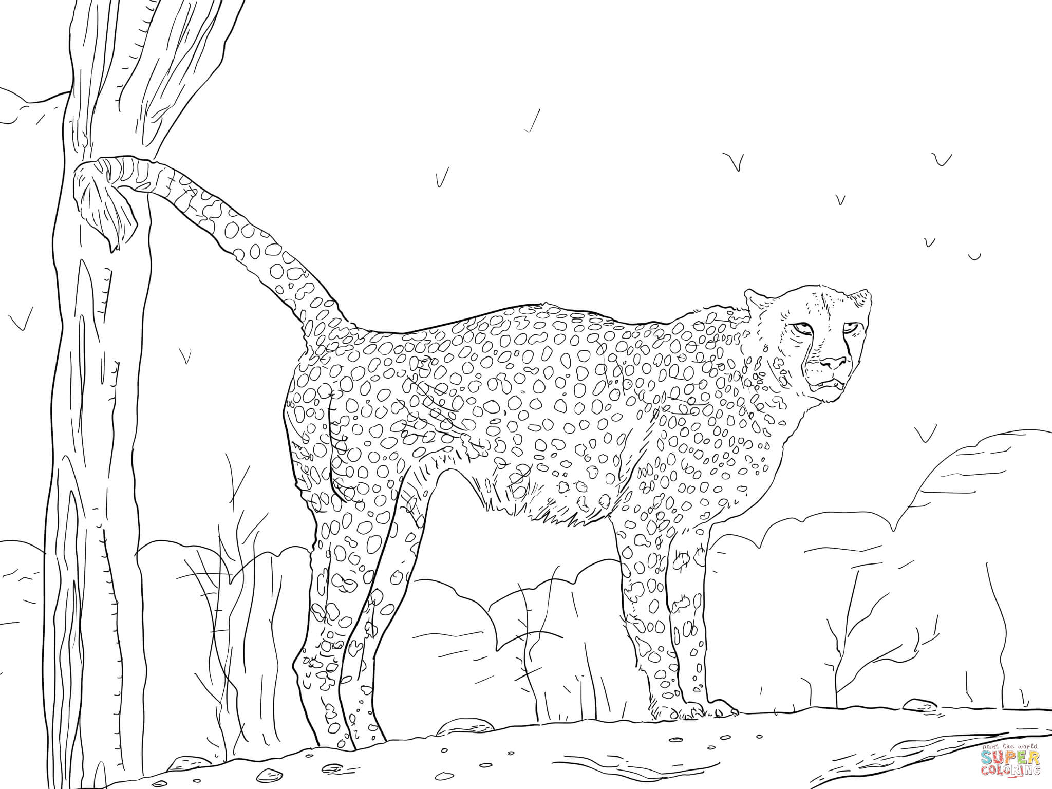 coloring pictures of cheetahs free printable cheetah coloring pages cheetah coloring pictures cheetahs coloring of