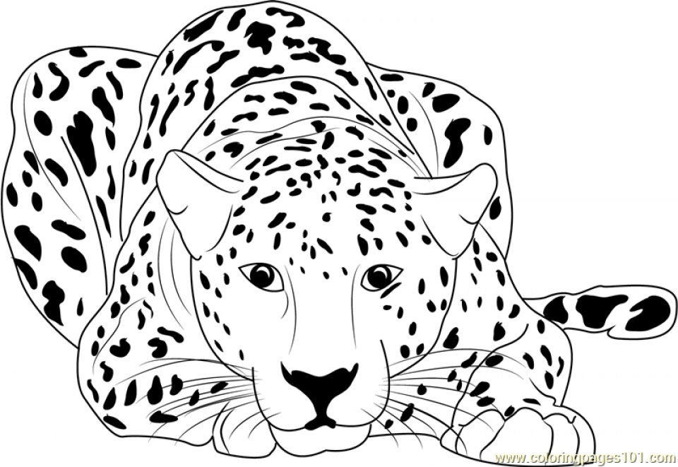 coloring pictures of cheetahs free printable cheetah coloring pages for kids of pictures coloring cheetahs
