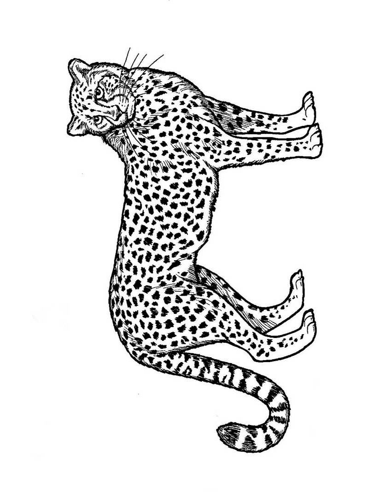 coloring pictures of cheetahs free printable cheetah coloring pages for kids pictures of coloring cheetahs
