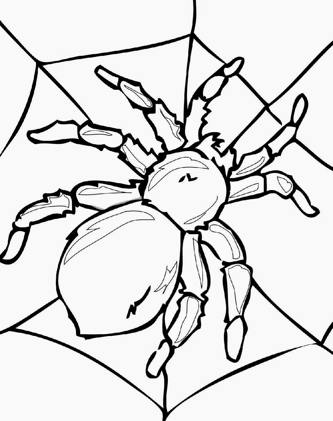 coloring pictures of insects bug coloring pages kidsuki coloring insects of pictures