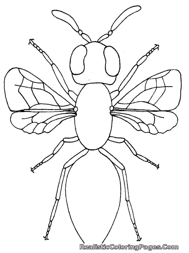coloring pictures of insects realistic insect coloring pages realistic coloring pages coloring pictures insects of