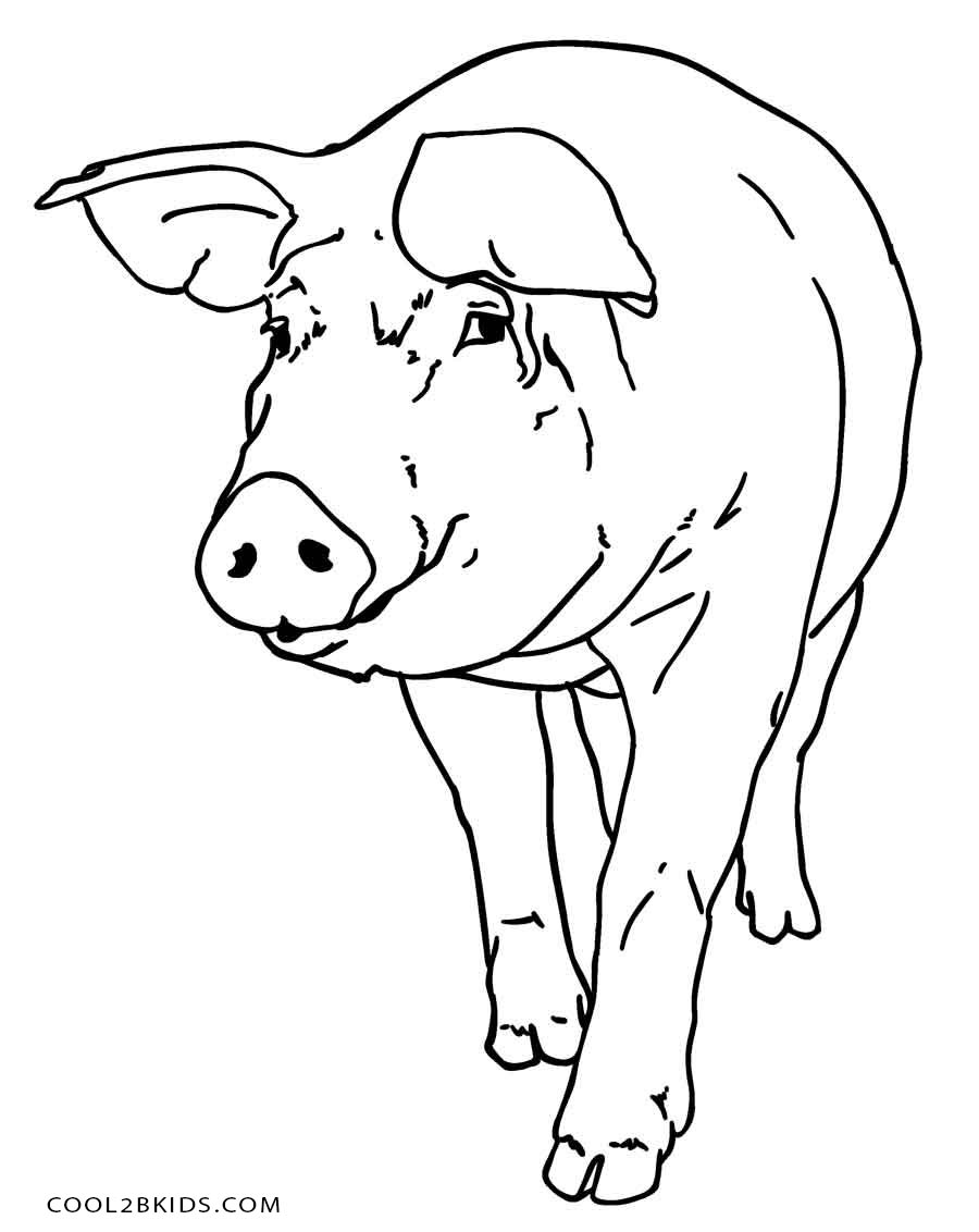 coloring pig pictures pig coloring pages getcoloringpagescom pictures coloring pig