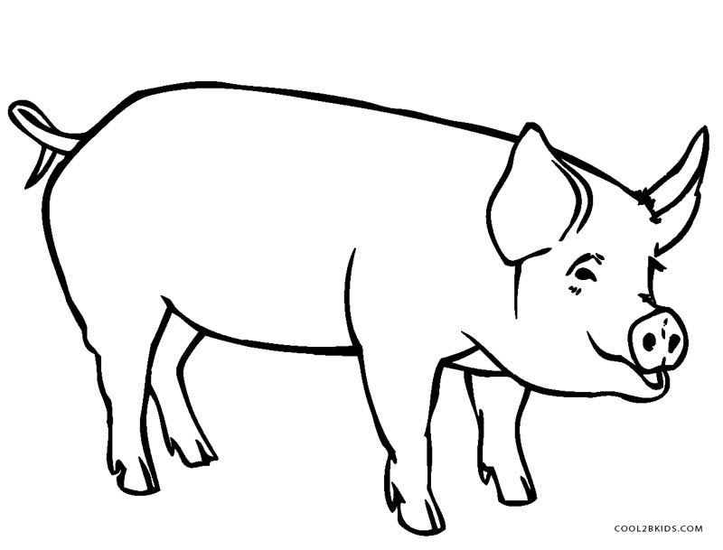 coloring pig pictures printable easy pig coloring pages for kids pictures pig coloring
