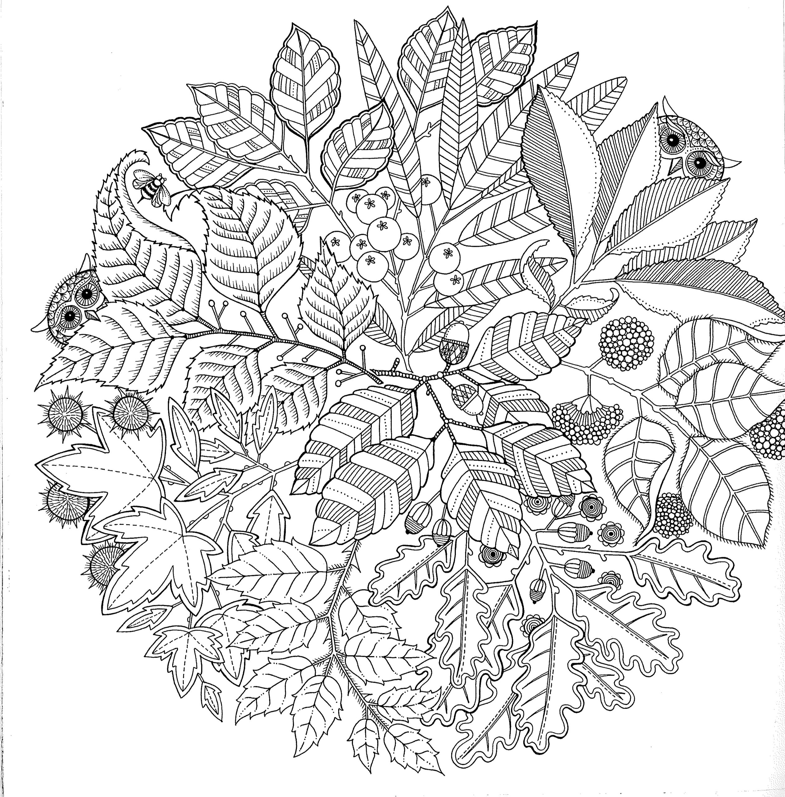 coloring prints for adults 7 floral adult coloring pages the graphics fairy prints for adults coloring
