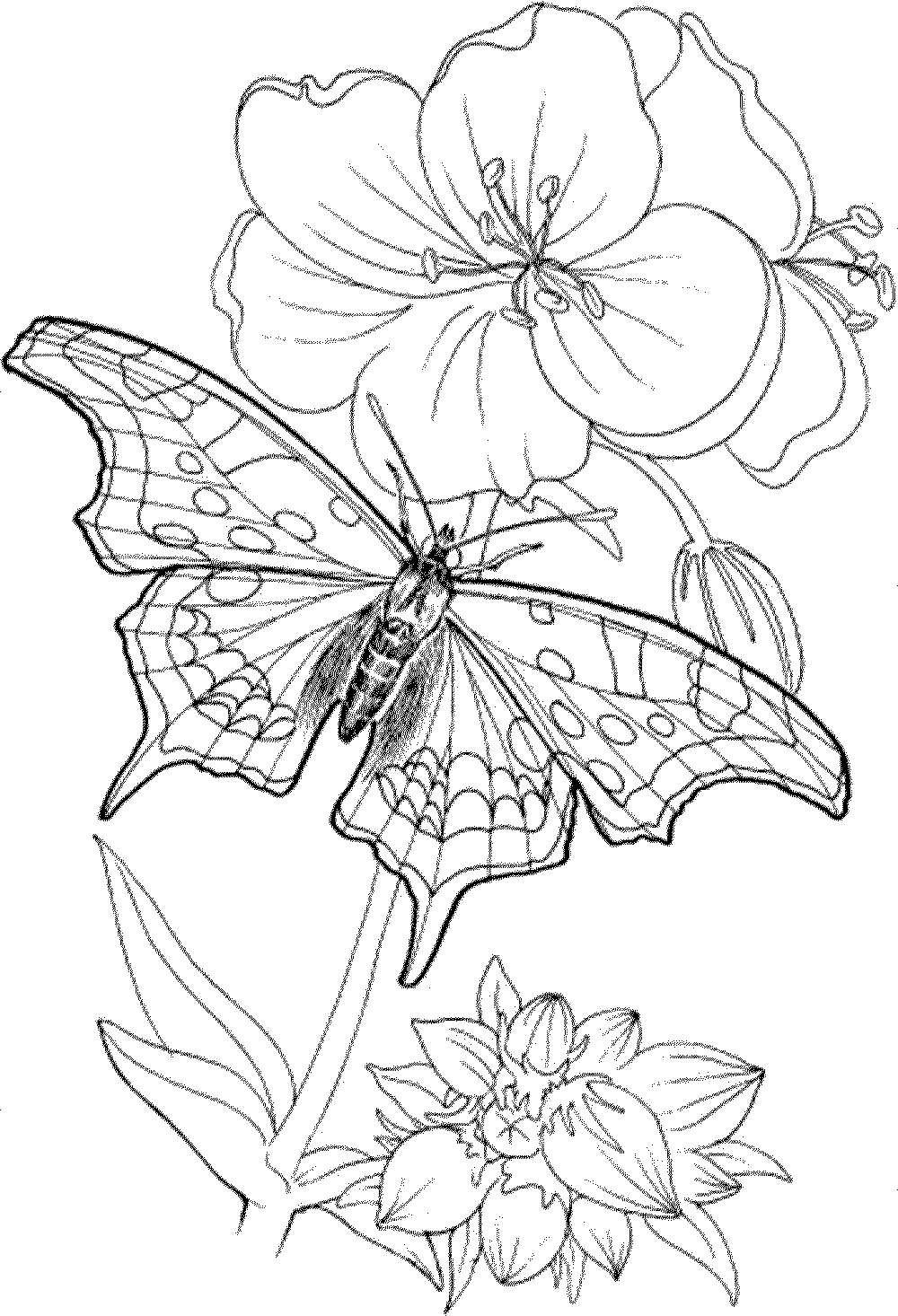 coloring prints for adults full size coloring pages for adults at getcoloringscom coloring for prints adults
