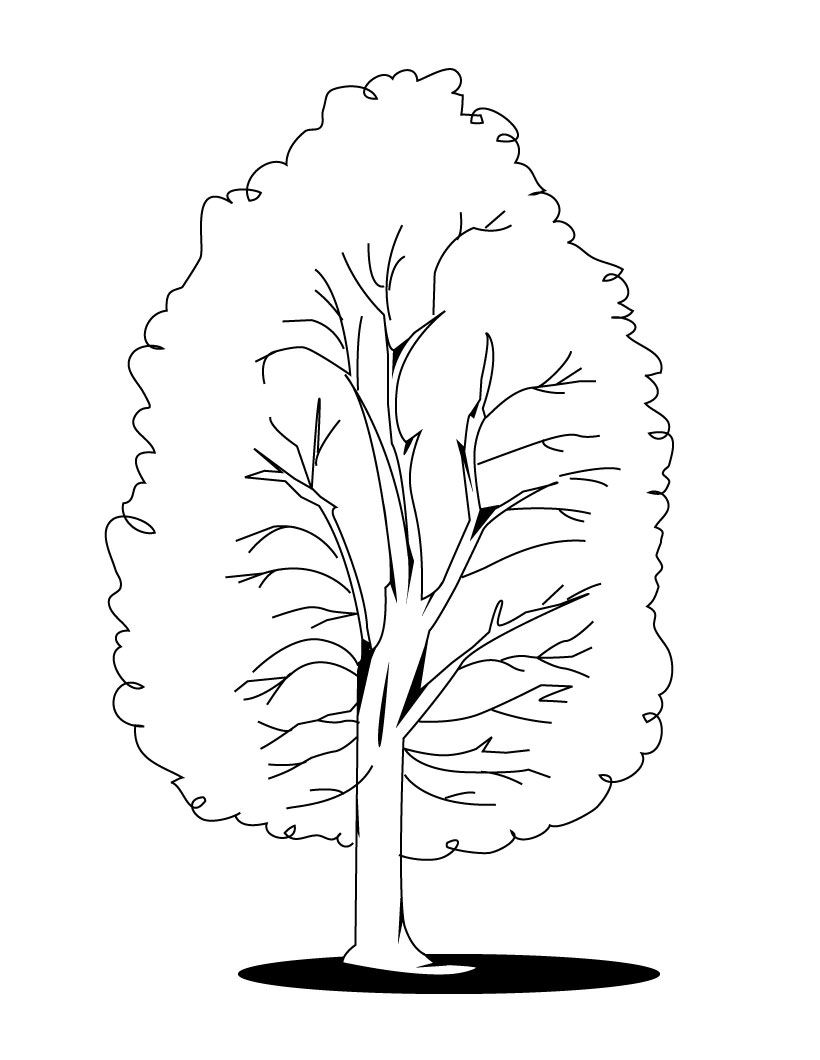 coloring sheet of a tree 13 best tree coloring pages for kids updated 2018 of a coloring tree sheet