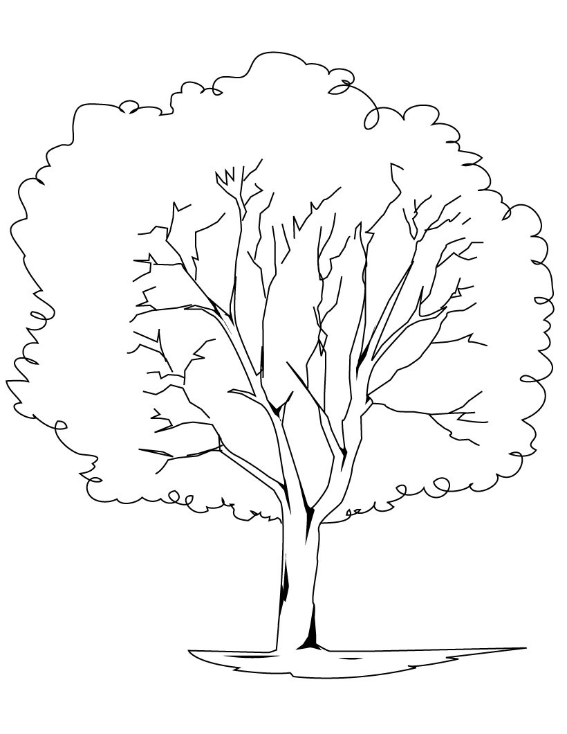 coloring sheet of a tree free printable tree coloring pages for kids coloring of a sheet tree