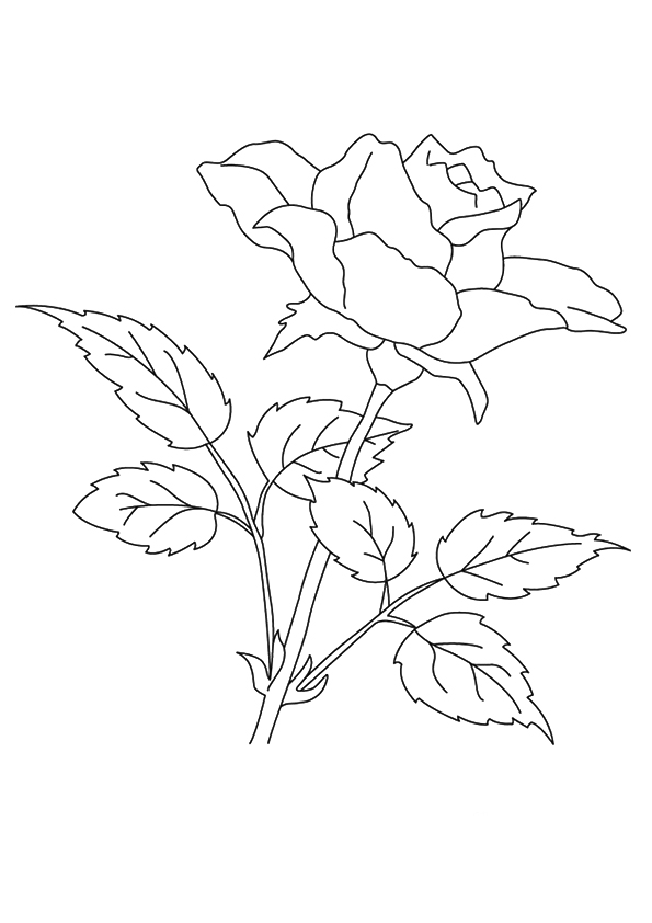 coloring sheet rose flower coloring pages picture of roses for flower bouquet coloring page color luna sheet flower pages coloring coloring rose