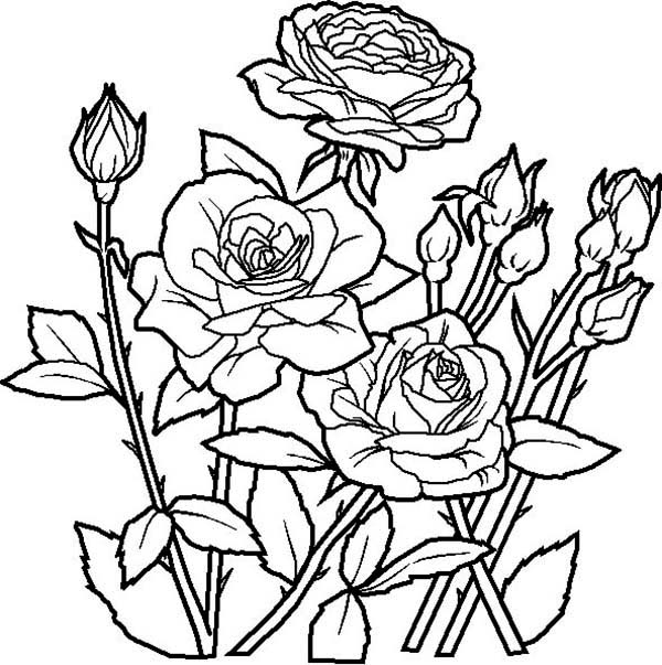 coloring sheet rose flower coloring pages rose flowers coloring pages free yescoloring rose coloring pages rose flower coloring sheet