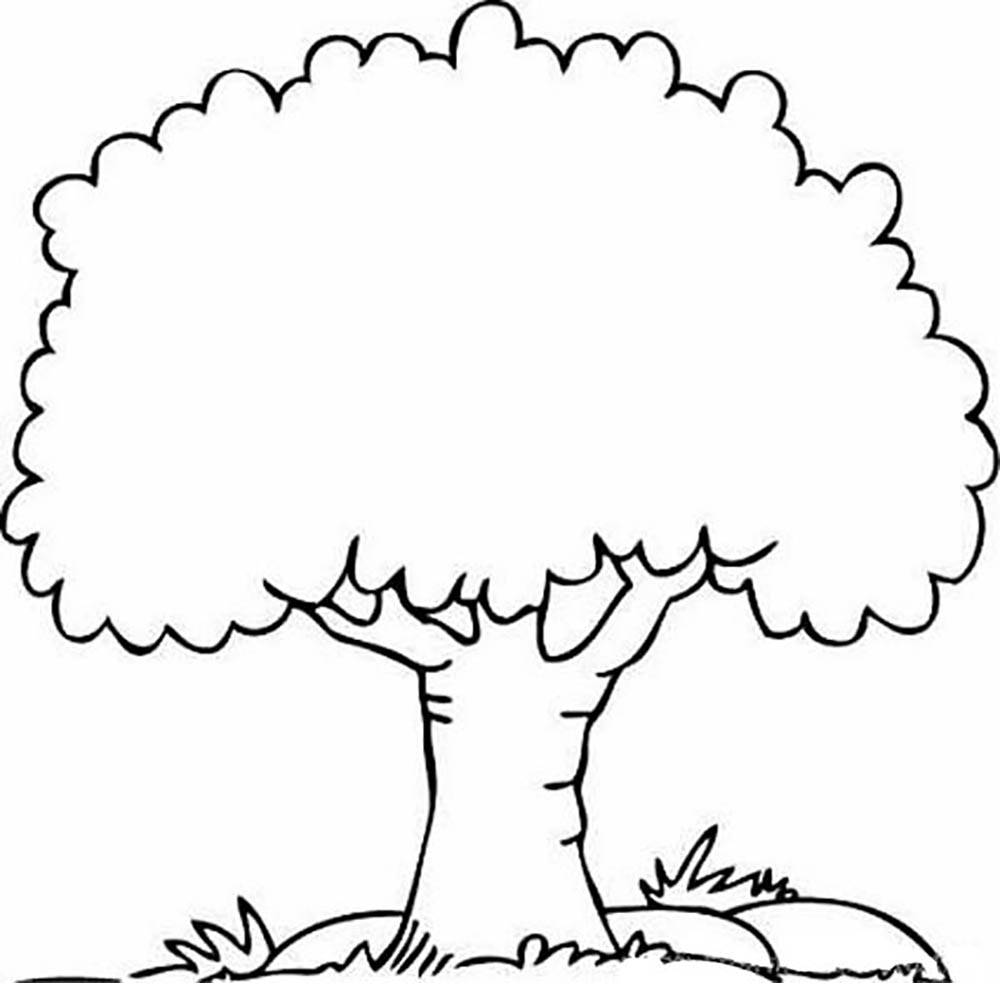 coloring sheet tree tree drawing outline free download on clipartmag sheet coloring tree