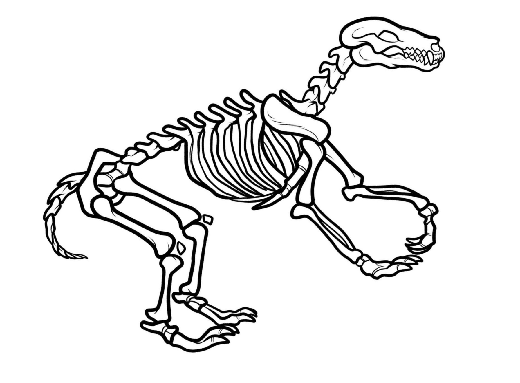 coloring skeleton pictures coloring pages skeleton free printable coloring pages skeleton pictures coloring
