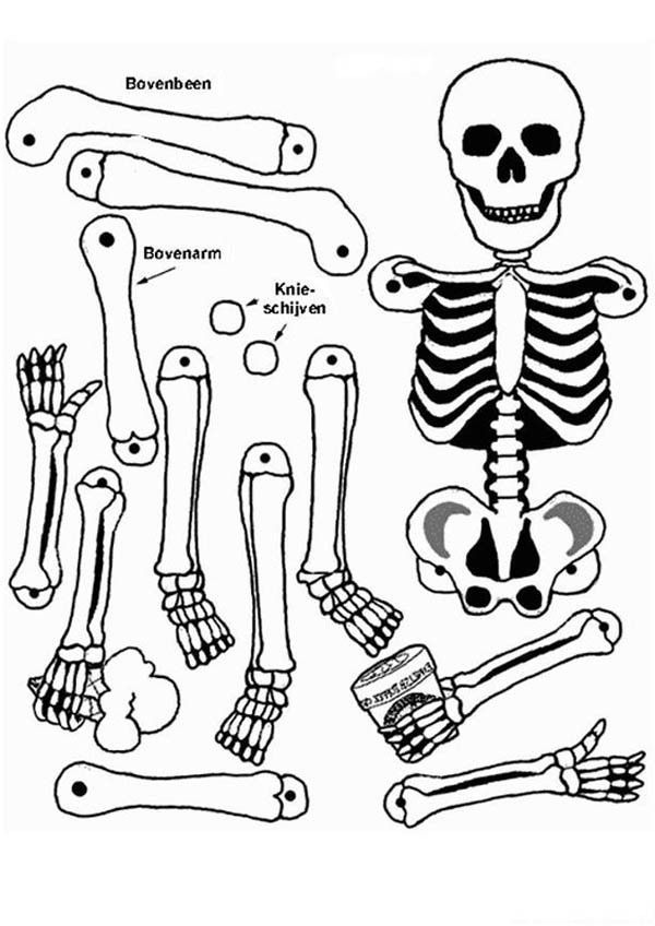 coloring skeleton pictures picture of a skeleton for kids free download on clipartmag pictures coloring skeleton