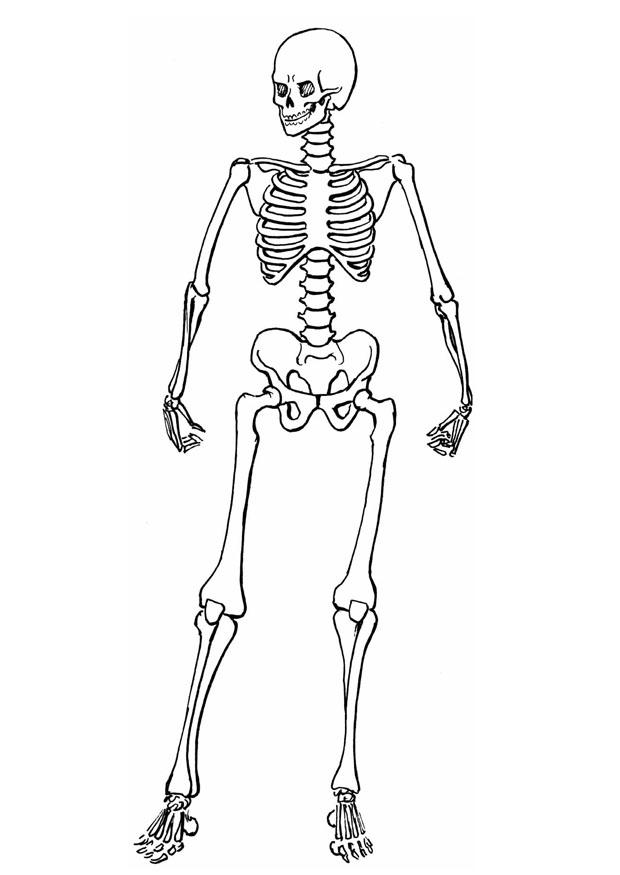 coloring skeleton pictures skeleton coloring pages to download and print for free skeleton coloring pictures