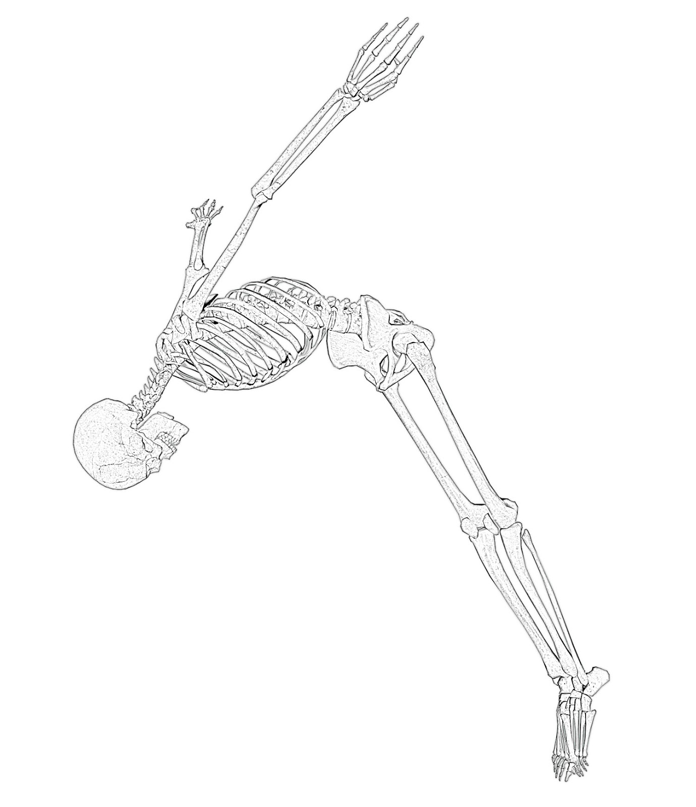 coloring skeleton pictures skeleton halloween coloring page woo jr kids activities skeleton coloring pictures