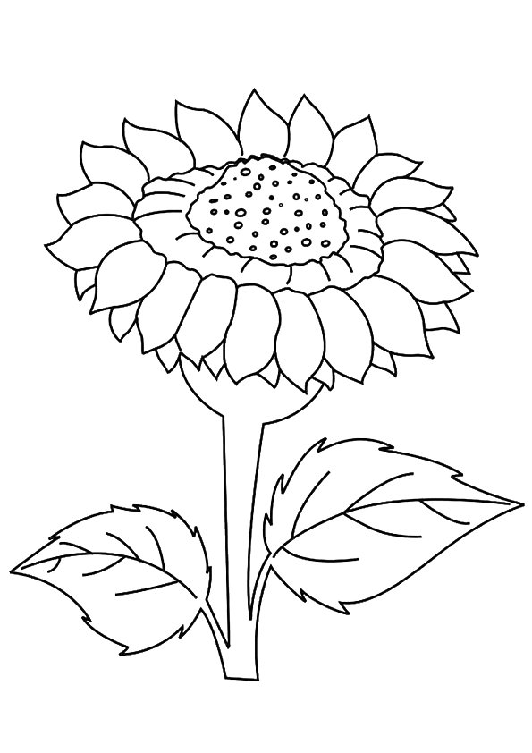 coloring sunflower picture free printable sunflower coloring pages sunflower sunflower picture coloring
