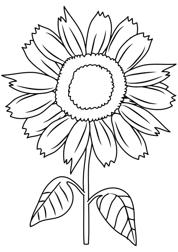 coloring sunflower picture sunflower coloring page at getdrawings free download picture sunflower coloring
