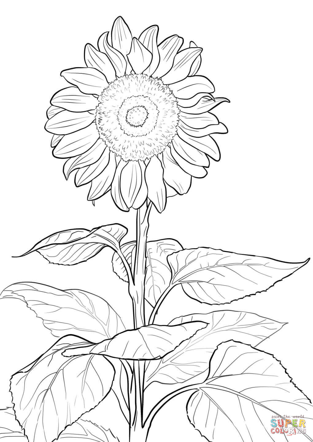 coloring sunflower picture sunflower coloring page free printable coloring pages picture coloring sunflower