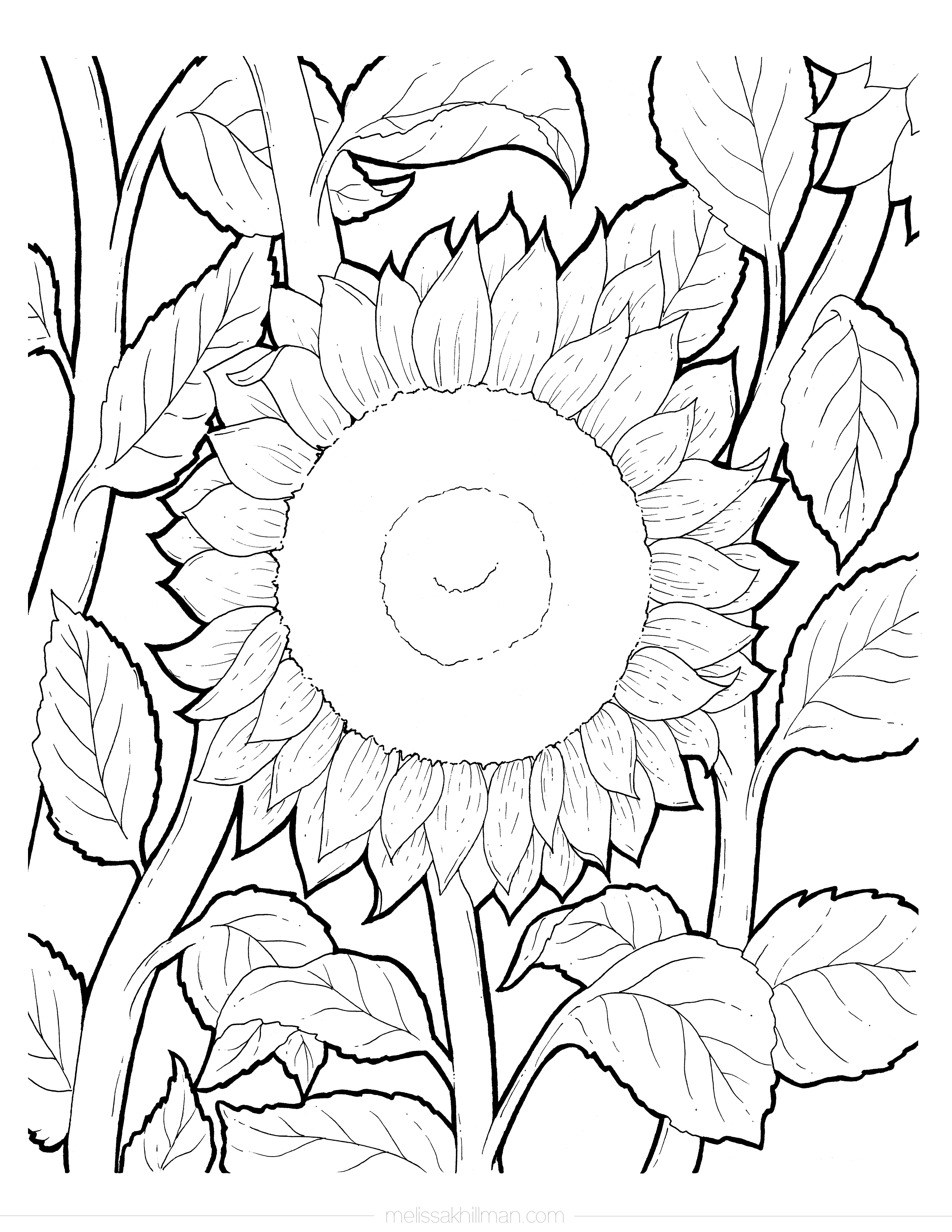 coloring sunflower picture sunflower coloring page picture coloring sunflower