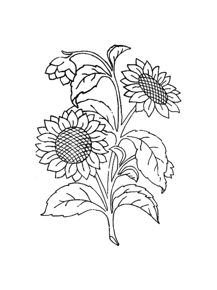 coloring sunflower picture sunflower coloring pages download and print sunflower picture coloring sunflower