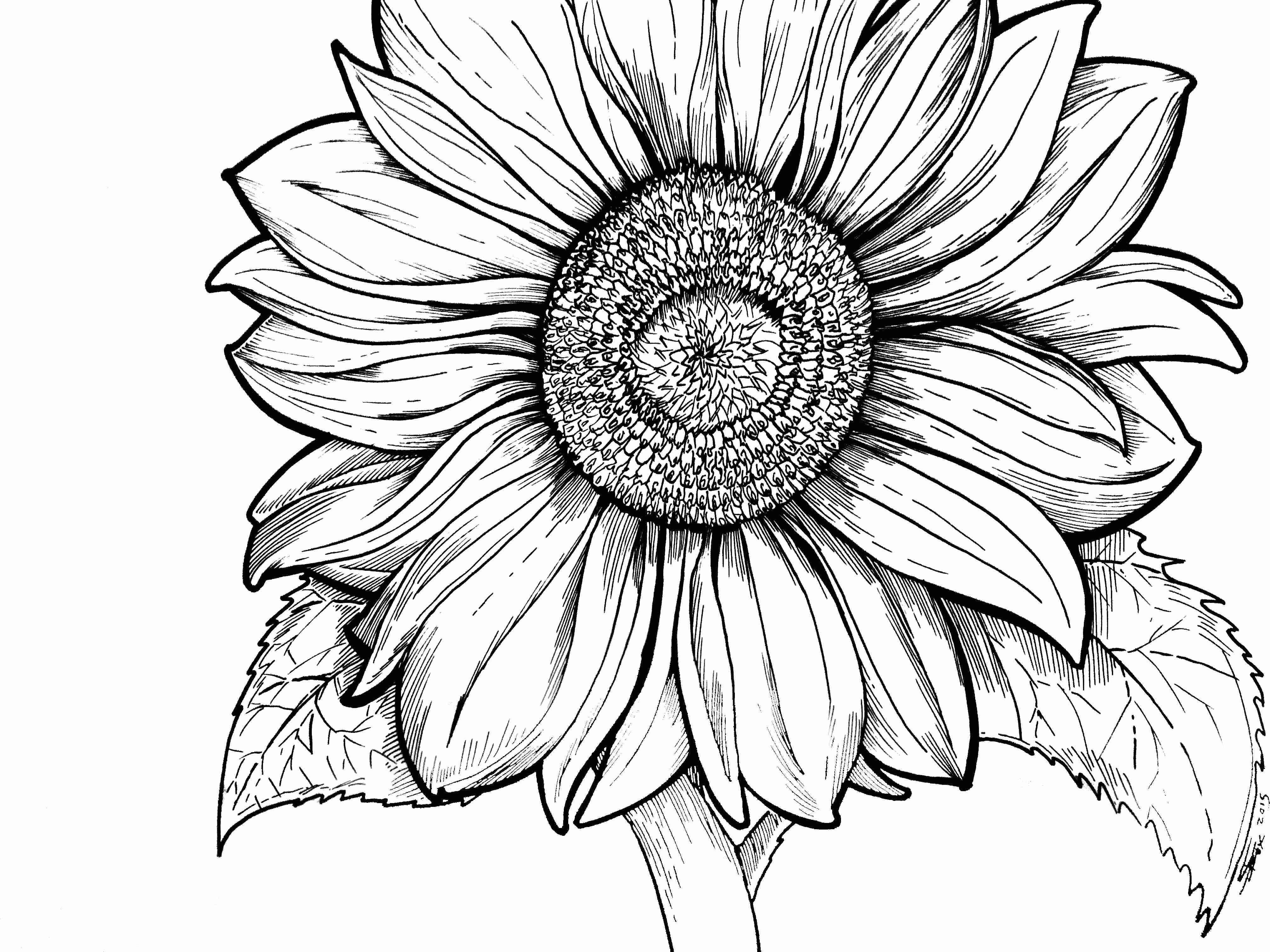 coloring sunflower picture sunflower coloring pages for adults at getdrawings free sunflower picture coloring