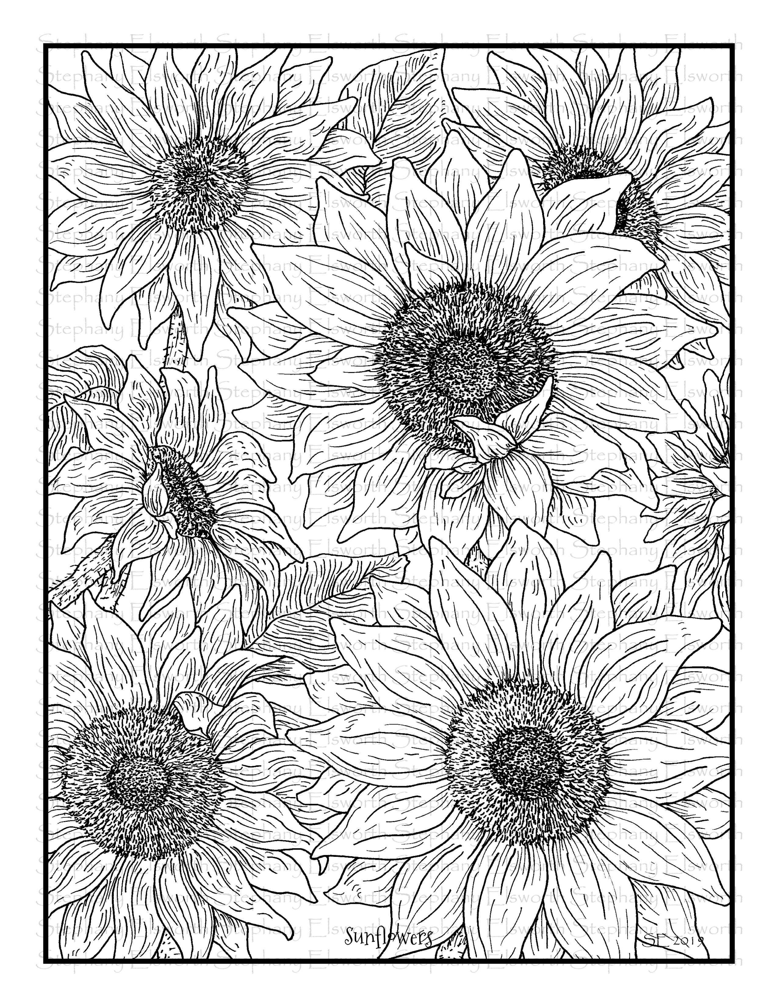 coloring sunflower picture sunflowers 8 12 x 11 printable coloring page color with sunflower coloring picture