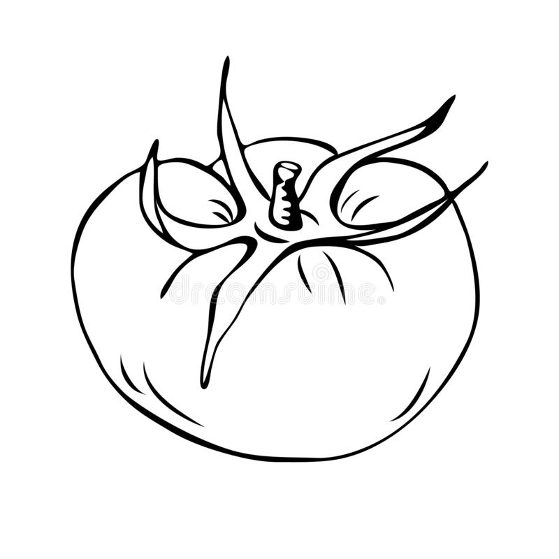 coloring tomato outline red tomato vegetable vegetable coloring pages tomato coloring outline