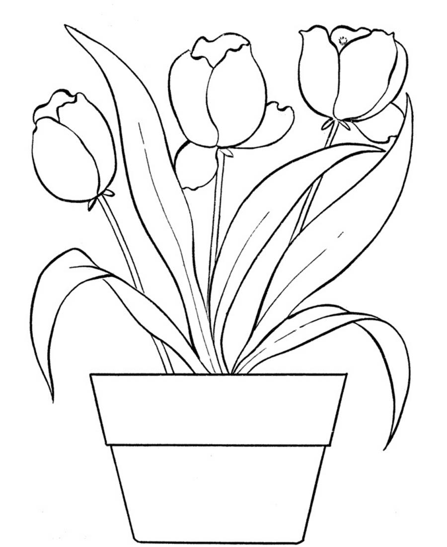 coloring tulip template 14 tulip coloring page print color craft tulip template coloring