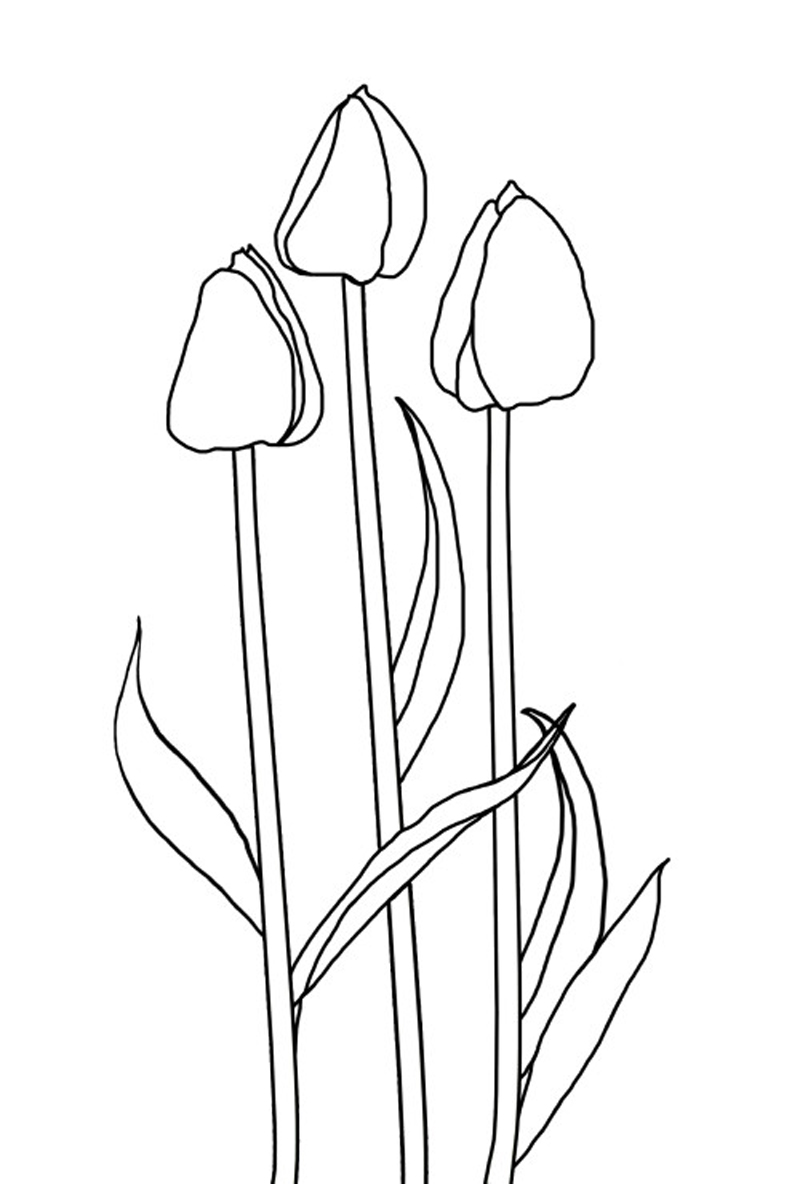 coloring tulip template 5 best images of free printable tulip stencil printable template tulip coloring