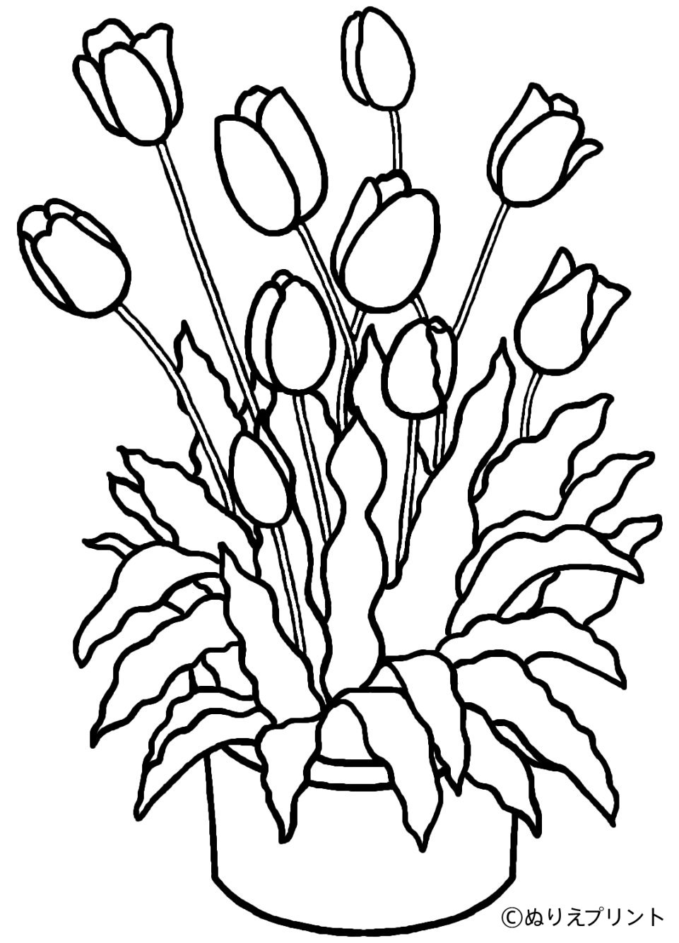 coloring tulip template beautiful tulip coloring pages collection garden coloring template tulip