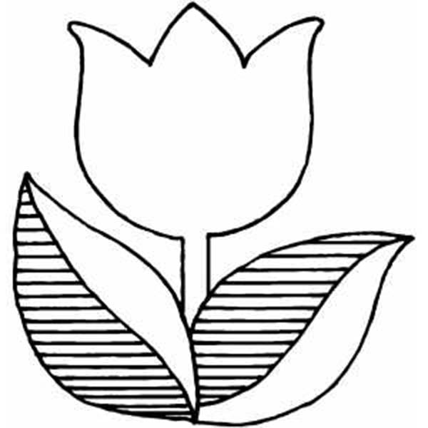 coloring tulip template tulip outline drawing at getdrawings free download tulip coloring template