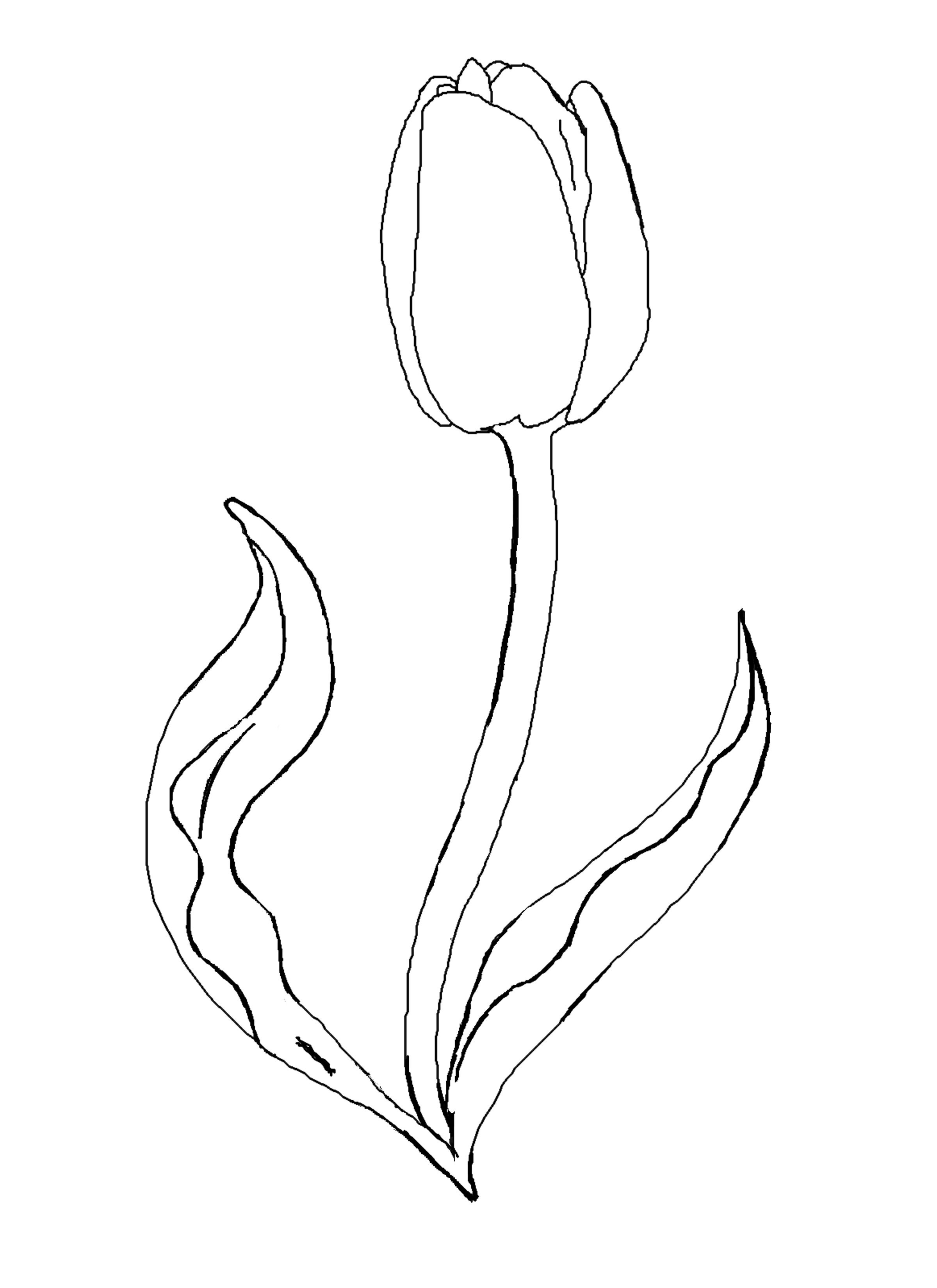 coloring tulip template tulip template printable flower templates printable tulip coloring template