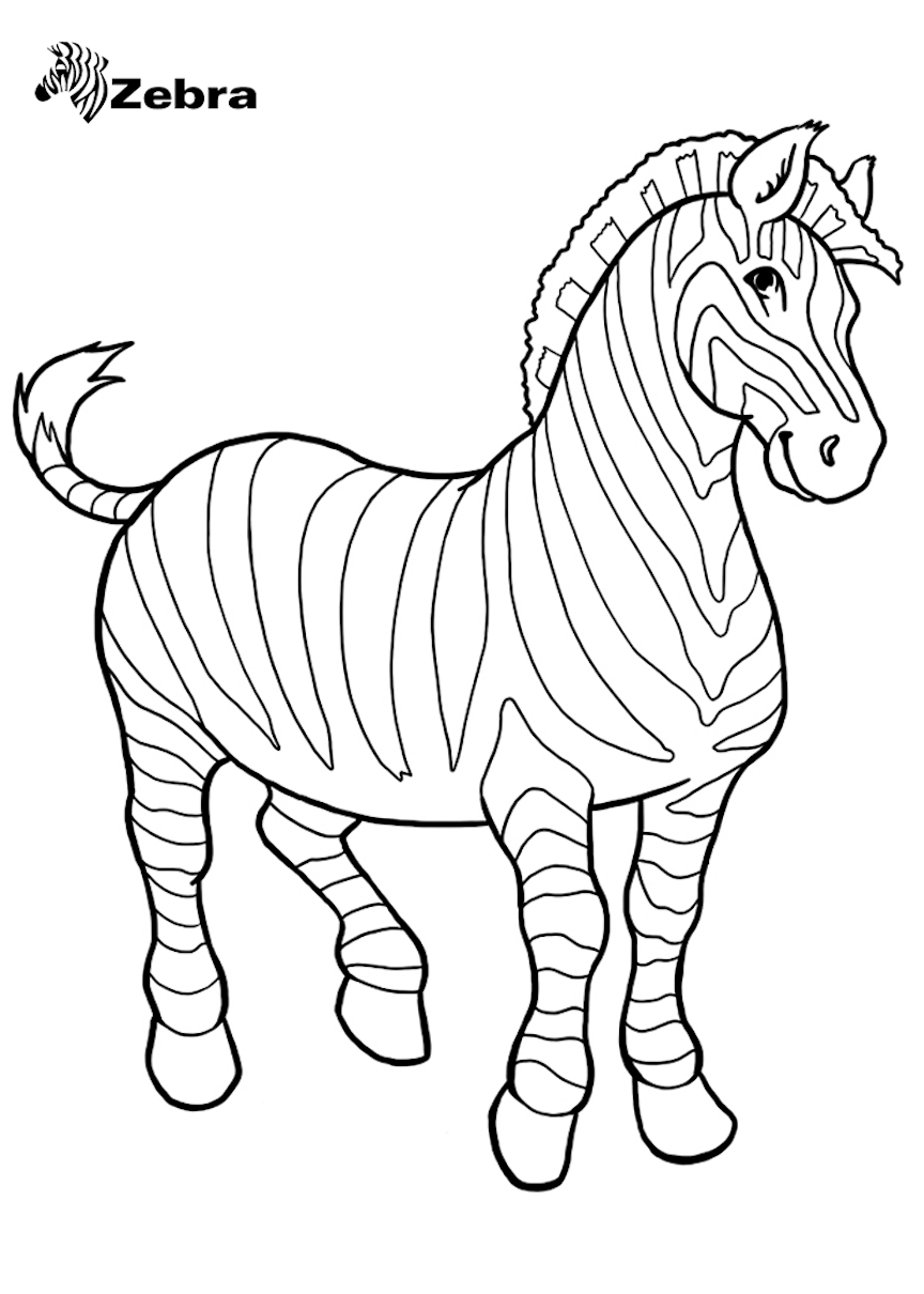 coloring zebra pictures free zebra coloring pages coloring pictures zebra