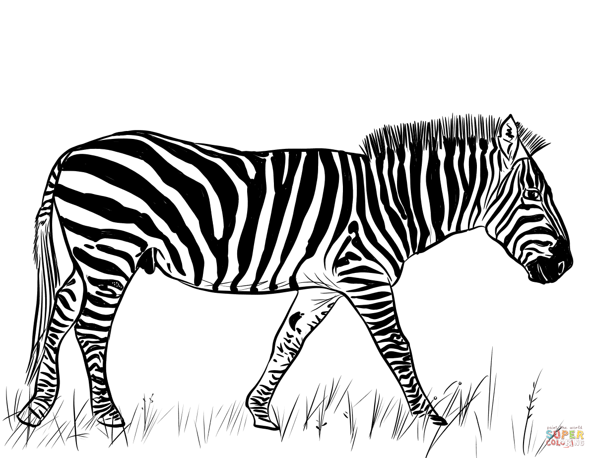 coloring zebra pictures zebra clipart coloring pages and other free printable zebra coloring pictures