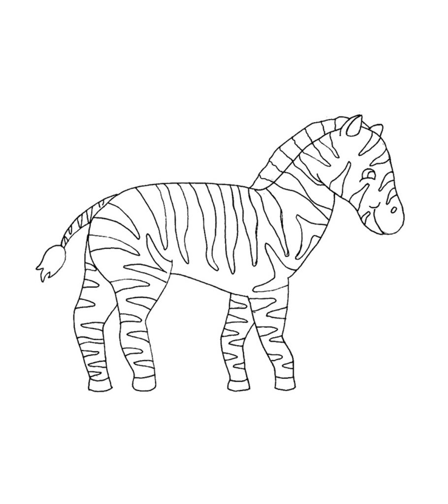 coloring zebra pictures zebra coloring page photos animal place coloring zebra pictures