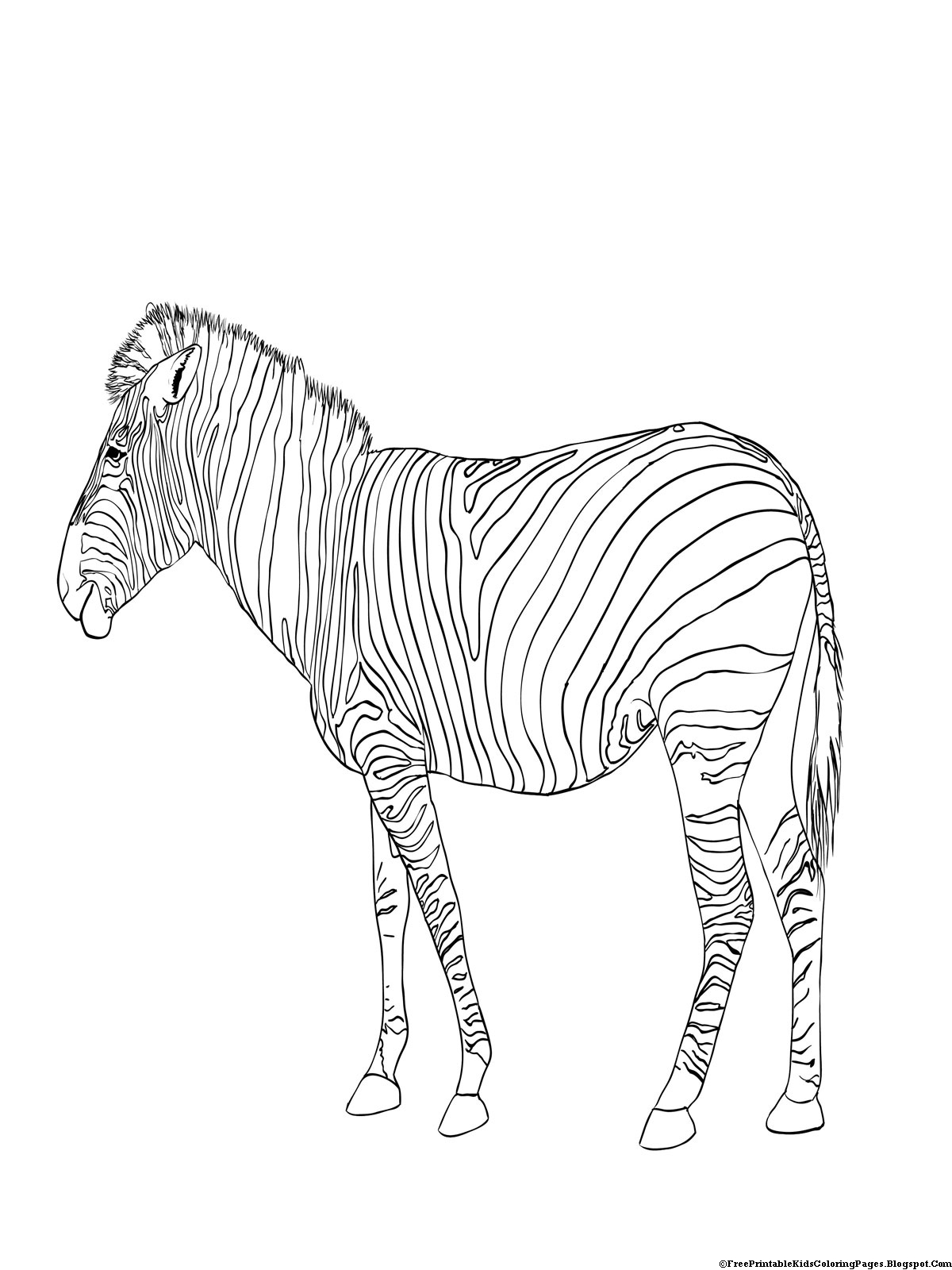 coloring zebra pictures zebra coloring pages free printable kids coloring pages pictures zebra coloring 1 1