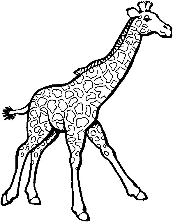 coloring zoo animals clipart black and white cute giraffe clipart black and white 20 free cliparts clipart coloring animals white zoo and black