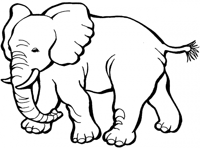 coloring zoo animals clipart black and white safari and jungle vector animals graphics on creative market clipart white coloring animals black zoo and
