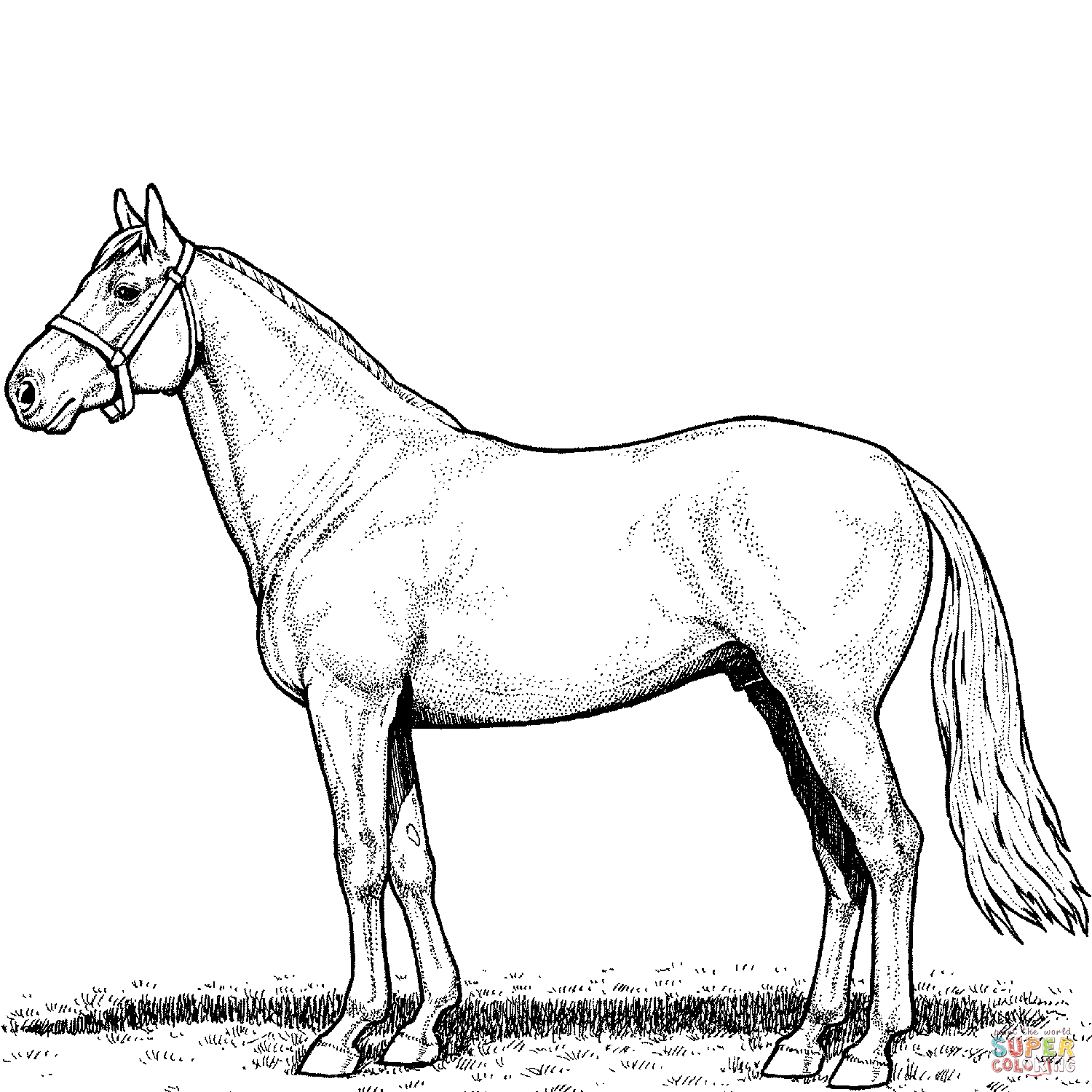 colouring horse 9 horse coloring pages free pdf document download horse colouring