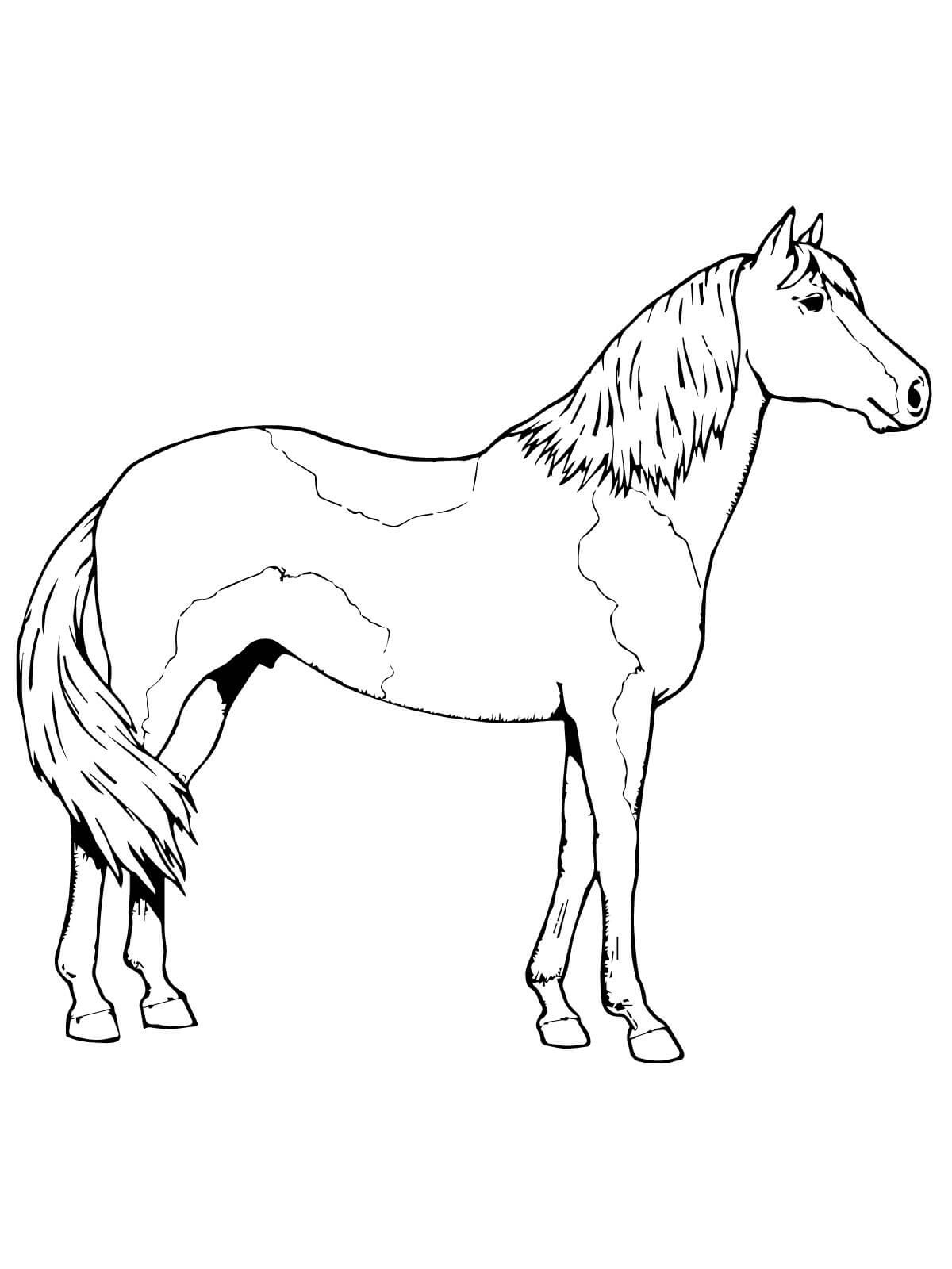 colouring horse coloring book page for adults print and download horse colouring horse