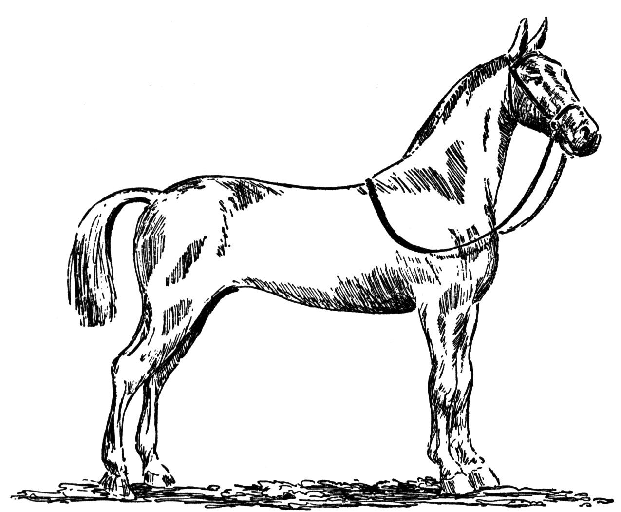 colouring horse coloring pages for girls horse free coloring home colouring horse
