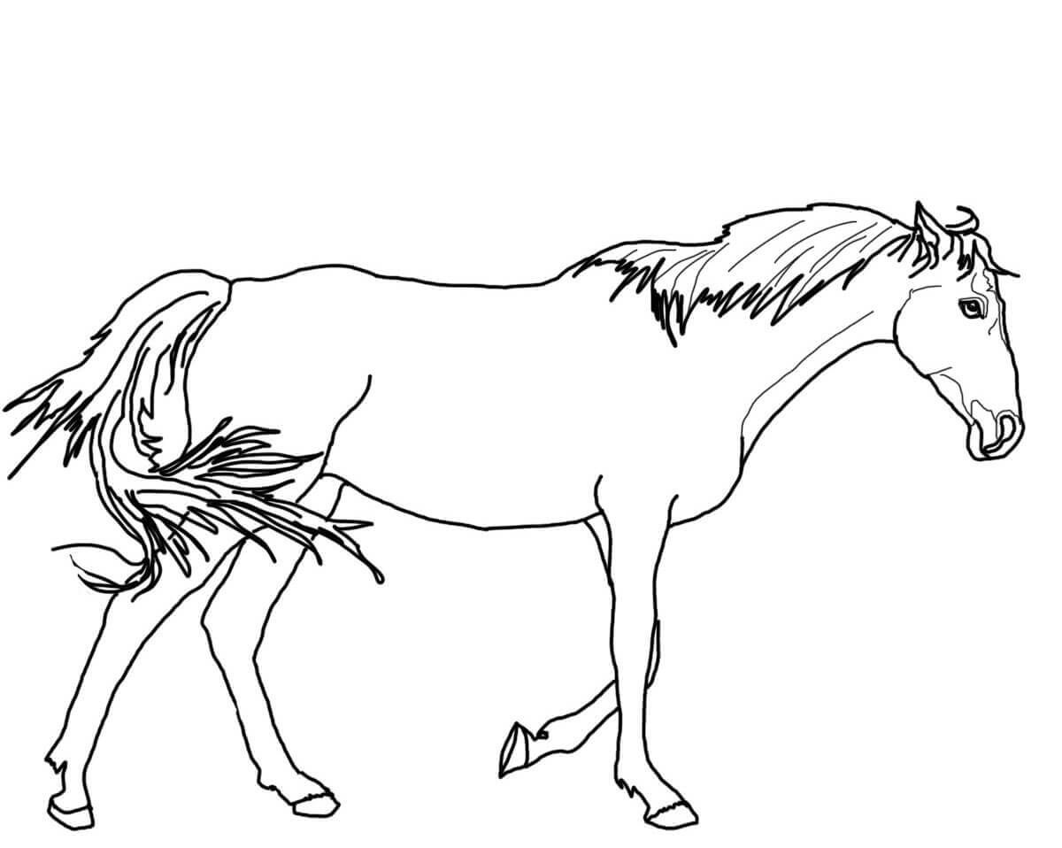 colouring horse free horse coloring pages colouring horse 1 1