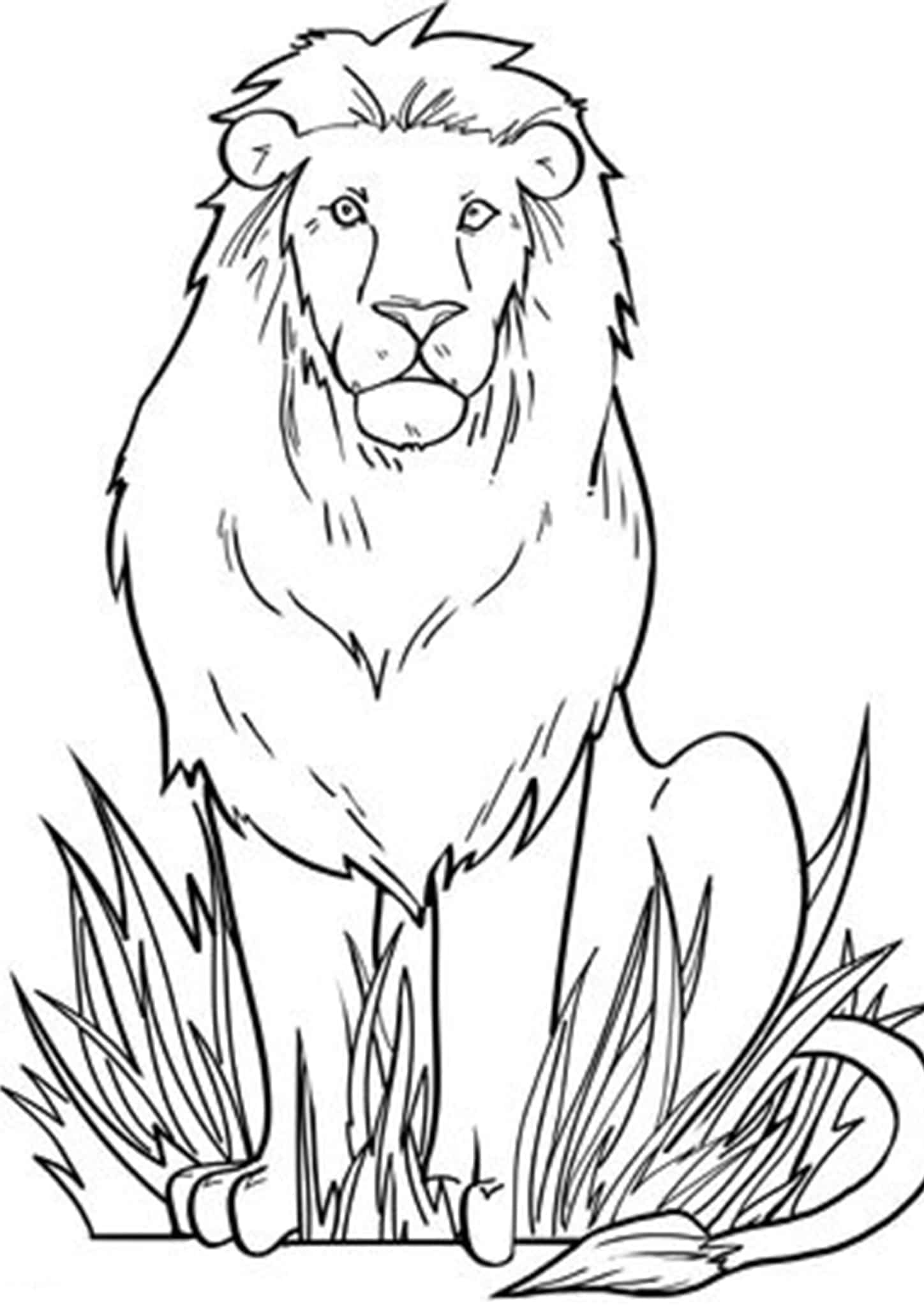 colouring images of lion lion cartoon drawing at getdrawings free download of lion images colouring