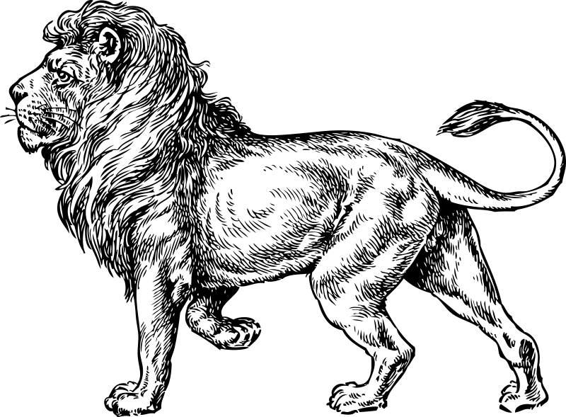 colouring images of lion lion coloring pages 2 coloring pages to print colouring lion images of