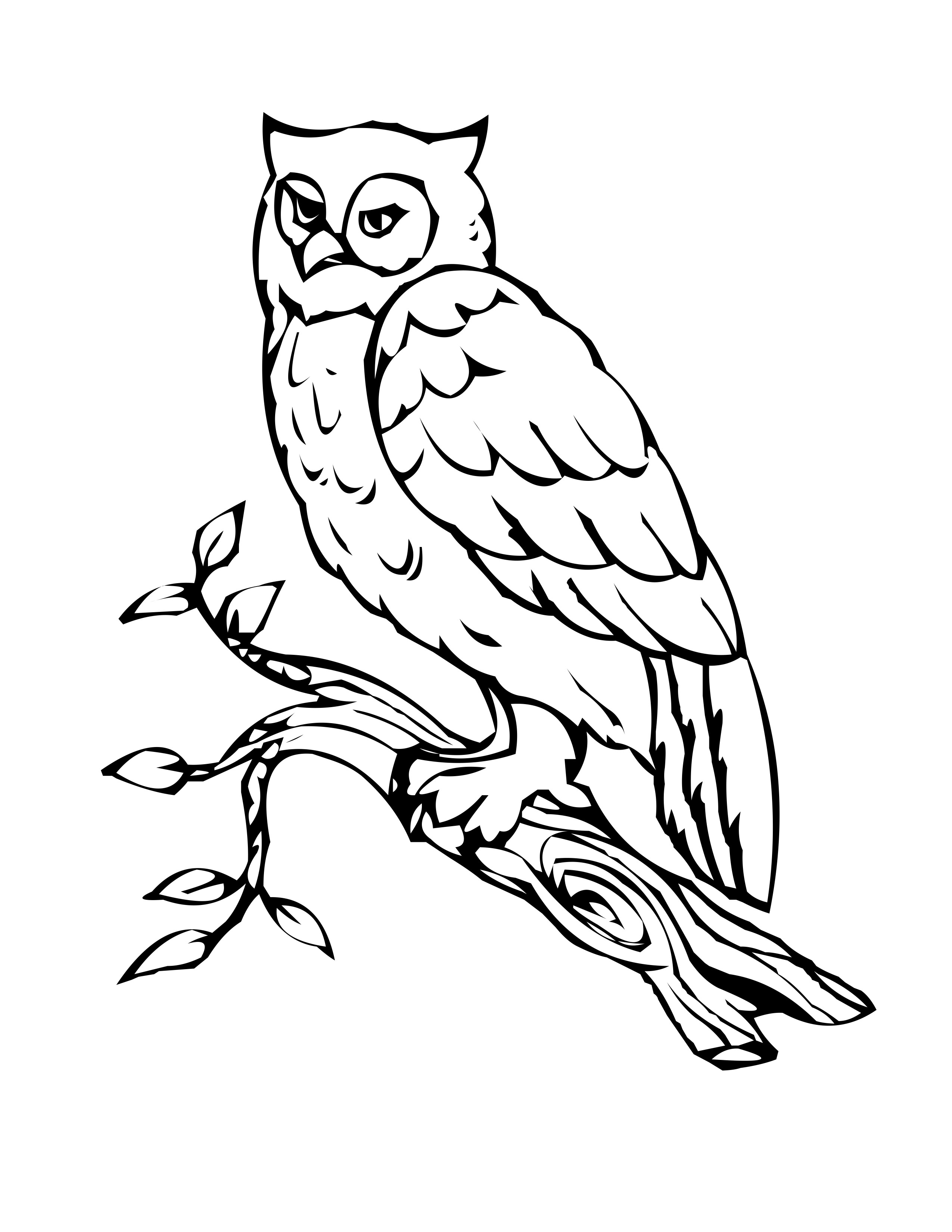 colouring owl bird coloring pages colouring owl